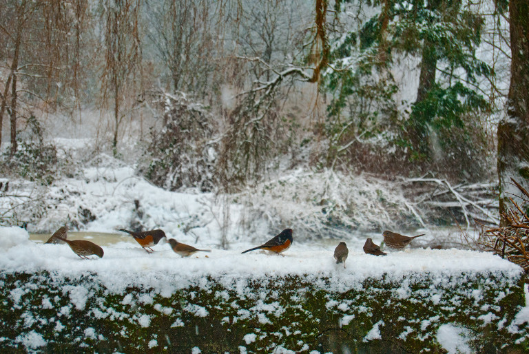 Birds Frolicking on Bridge
