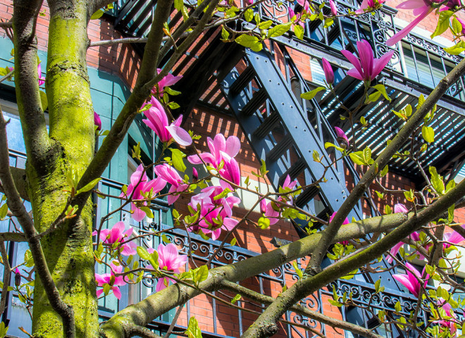 Magnolias and Stairs