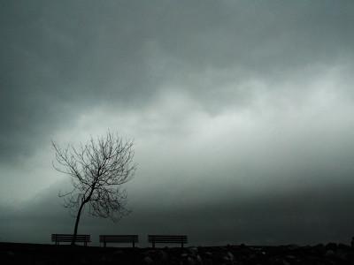 Lonely Tree
