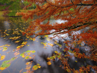 Van Dusen Fall Colours #2