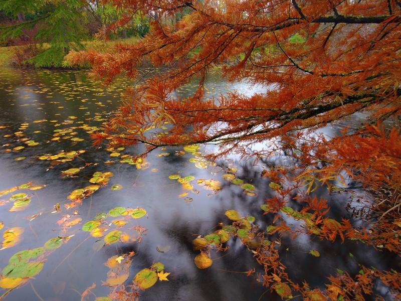 Van Dusen Fall Colours #2