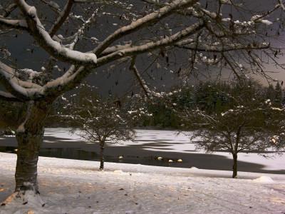 Stillness at Winter's Night 2