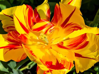 West End Flower